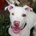Rescue groups and animal shelters are flooded with young pit bulls. Many rescue groups have stopped taking in pit bulls due to lack of space and inability to find homes for them.